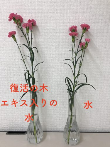 復活の木エキス入り水と、通常の水の効果を花を使って比べている