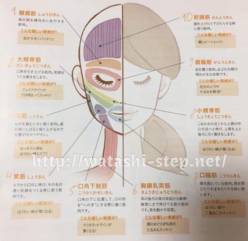 たるみを改善する顔の表情筋