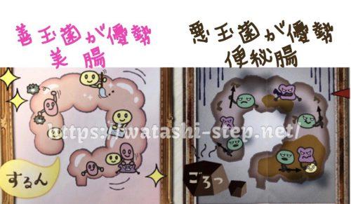 善玉菌が優勢な腸と、悪玉菌が優勢な腸の比較