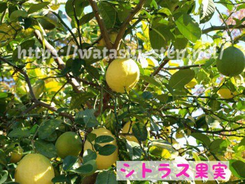 ニュートロックスサンに配合されているシトラス果実